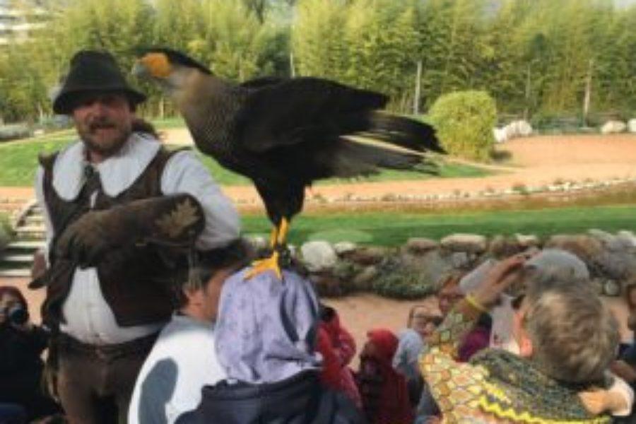 Visita alla Falconeria Locarno