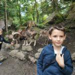 Uscita allo zoo (Tierpark) di Goldau
